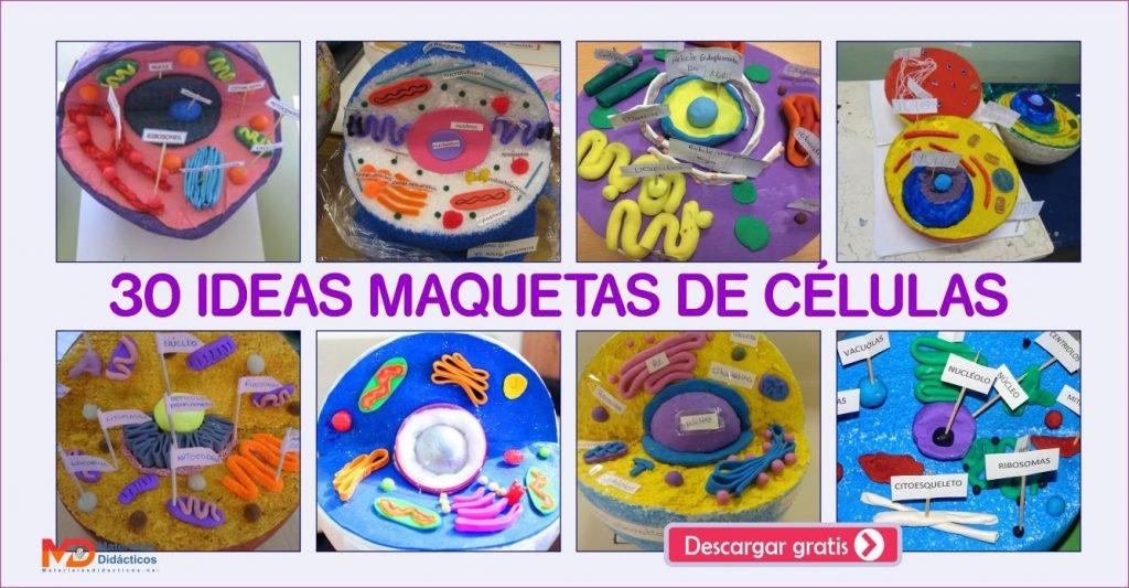 30 IDEAS MAQUETAS DE CÉLULAS
